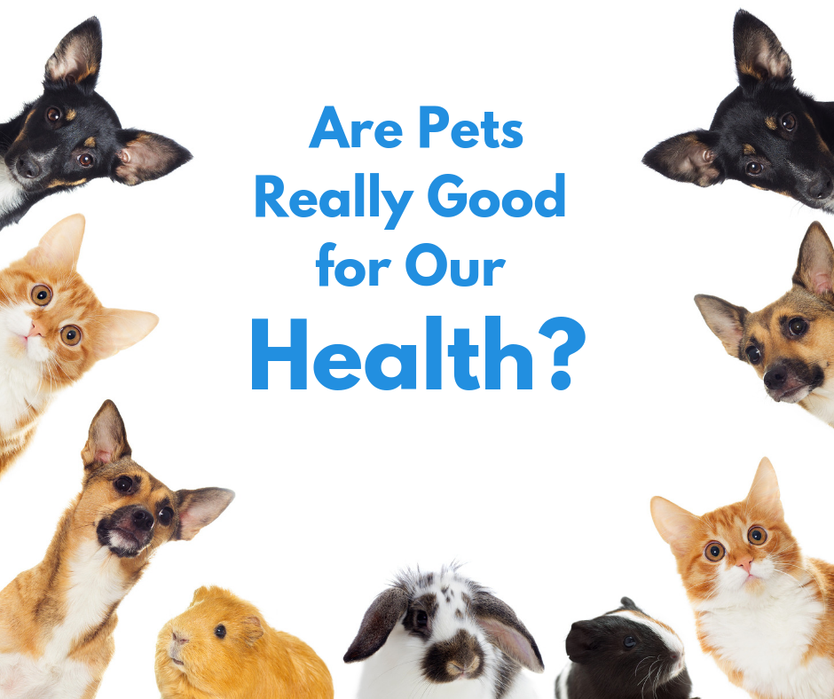 Are Pets Really Good for Our Health? thumbnail image